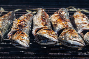 Mackerel grilledの写真素材 [FYI00789330]