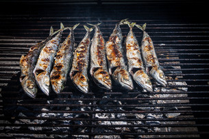 Mackerel grilledの写真素材 [FYI00789344]