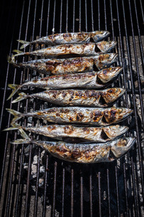 Mackerel grilledの写真素材 [FYI00789379]