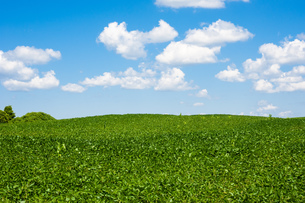 Rolling farm field horizon under cumulus cloudsの写真素材 [FYI00789970]