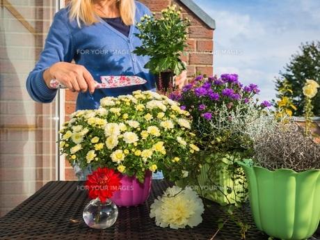woman planting fall flowersの素材 [FYI00790403]