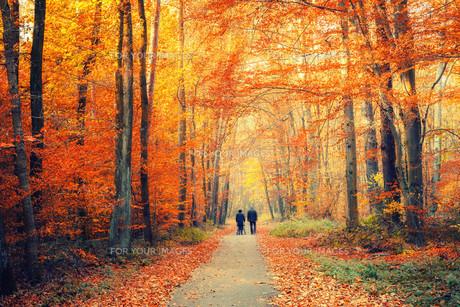 Autumn forestの素材 [FYI00790440]