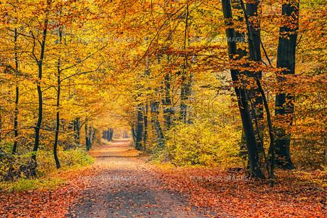 Autumn forestの素材 [FYI00790447]