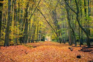 Autumn forestの素材 [FYI00790522]