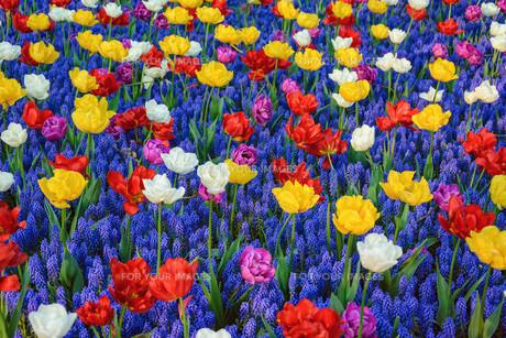 Flowersの写真素材 [FYI00791035]