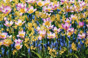 Flowersの写真素材 [FYI00791043]