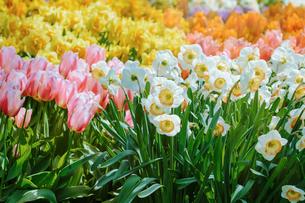 Flowersの写真素材 [FYI00791049]