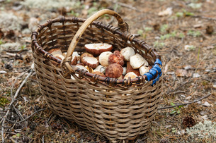 Basket with mushroomsの写真素材 [FYI00791130]