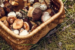 Basket with mushroomsの写真素材 [FYI00791154]