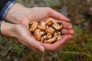 Handful of mushroomsの写真素材 [FYI00791156]
