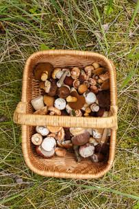 Basket with mushroomsの写真素材 [FYI00791158]