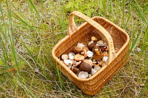 Basket with mushroomsの写真素材 [FYI00791160]