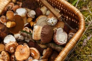 Basket with mushroomsの写真素材 [FYI00791173]