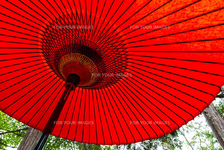 Traditional japanese red umbrellaの写真素材 [FYI00791730]
