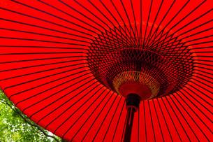 Red oriental paper umbrellの写真素材 [FYI00791759]