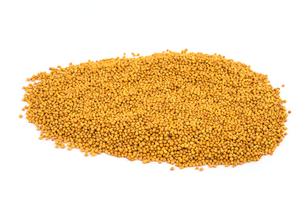 mustard seeds yellowの写真素材 [FYI00792312]
