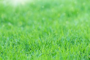 green grass on morning freshの写真素材 [FYI00792763]