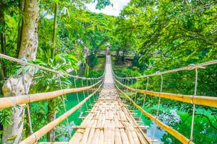 Bamboo pedestrian suspension bridge over riverの写真素材 [FYI00792963]