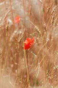 plants_flowersの素材 [FYI00793088]