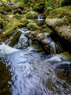 bavarian forest,bavaria,germanyの写真素材 [FYI00793869]