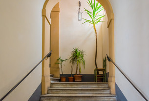 Stairs, plants and a chairの写真素材 [FYI00794163]