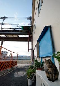 街角と野良猫の写真素材 [FYI00795014]