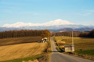 秋の畑作地帯と冠雪した山の写真素材 [FYI00795267]