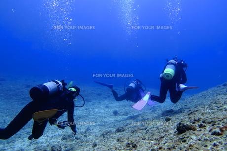 グループで海底を泳ぐダイバーの写真素材 [FYI00795309]