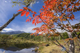 秋彩の乗鞍高原まいめの池の写真素材 [FYI00795460]