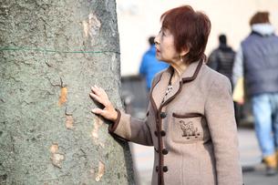 私もこの木くらい長生きしたいわぁとおばあちゃんの写真素材 [FYI00795533]