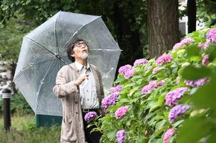 雨とおじいちゃんと上野の紫陽花の写真素材 [FYI00795539]