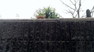 こちらを見つめる猫の写真素材 [FYI00796177]