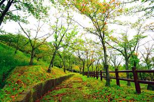 雨上がりの山の公園の写真素材 [FYI00796439]
