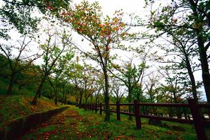 雨上がりの山の公園の写真素材 [FYI00796441]