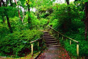 雨上がりの山の公園の写真素材 [FYI00796442]