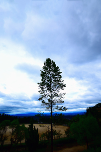 山頂の大木の写真素材 [FYI00796451]