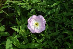 名もなき花の写真素材 [FYI00796762]