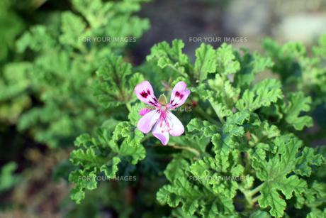 名もなき花の写真素材 [FYI00796778]