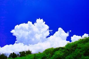 夏の宮古島、南国の林と夏雲の写真素材 [FYI00796830]
