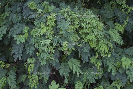 熱帯植物バックグラウンドの写真素材 [FYI00796852]