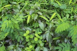 熱帯植物バックグラウンドの写真素材 [FYI00796855]