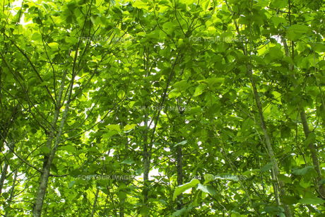 熱帯植物バックグラウンドの写真素材 [FYI00796857]