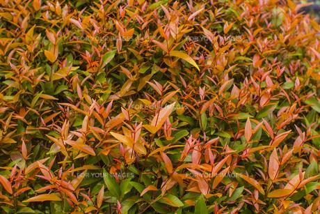 熱帯植物 バックグラウンドの写真素材 [FYI00796863]