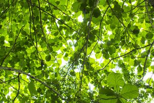 熱帯植物 バックグラウンドの写真素材 [FYI00796865]