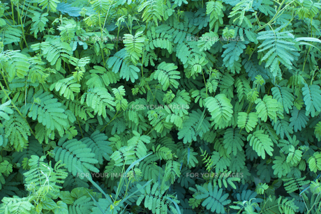 熱帯植物 バックグラウンドの写真素材 [FYI00796866]