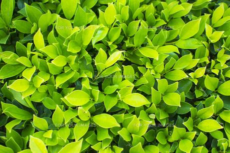 熱帯植物 バックグラウンドの写真素材 [FYI00796868]