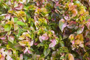 熱帯植物 バックグラウンドの写真素材 [FYI00796871]