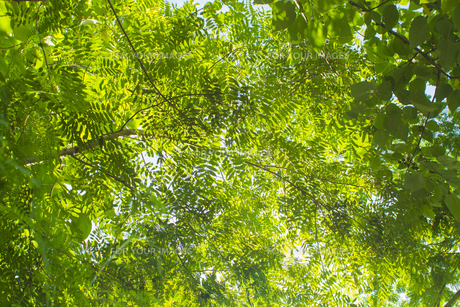 熱帯植物 バックグラウンドの写真素材 [FYI00796873]