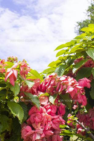熱帯植物の写真素材 [FYI00796899]