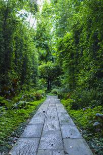 緑に囲まれた小道の写真素材 [FYI00797079]